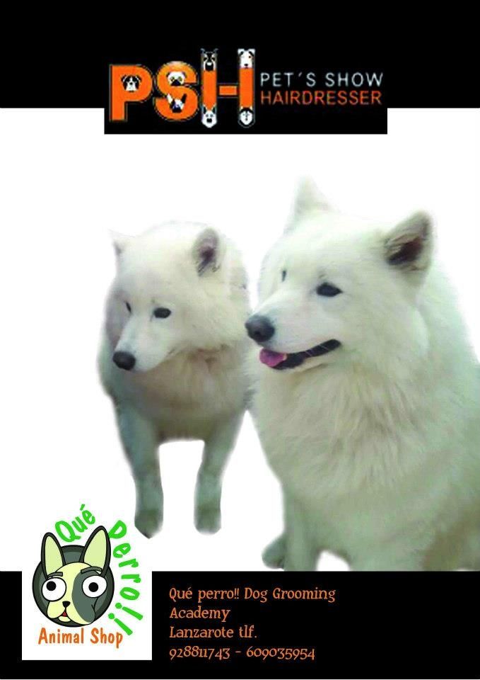 Academy Dog Groomig Laureano Alvarez Delgado Lanzarote - Canarias. 928 811 743 - 609 035 954