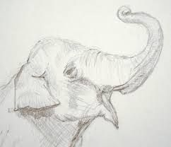Image result for easy pencil drawings of animals for beginners