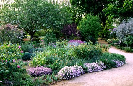 California native plants garden - drought resistant...this is what we need!!!