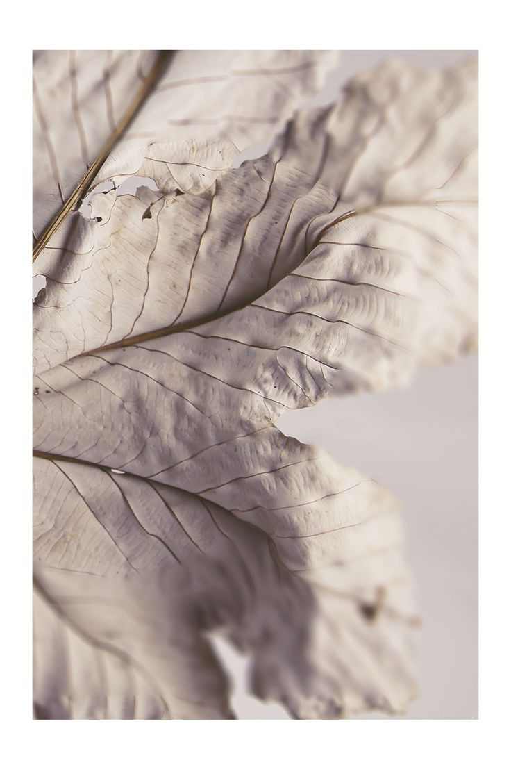chalky white leaf