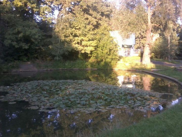 Pond in Prosek