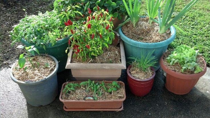 my garden in pots