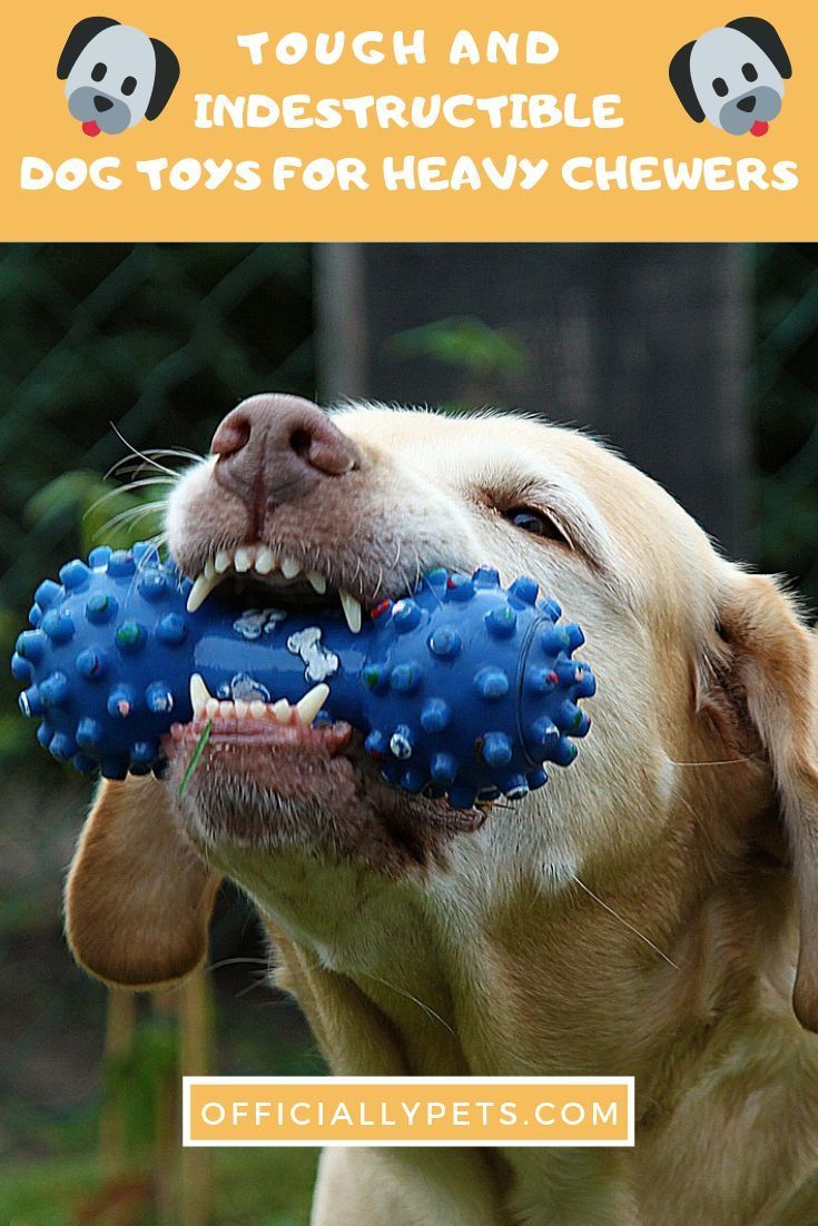 Top 7 Best Tough Indestructible Dog Toys For Heavy Chewers