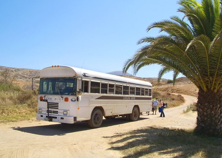 Safari Bus
