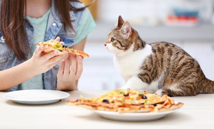 Here Are The Human Foods Your Cat Can Eat Too Cats And Meows