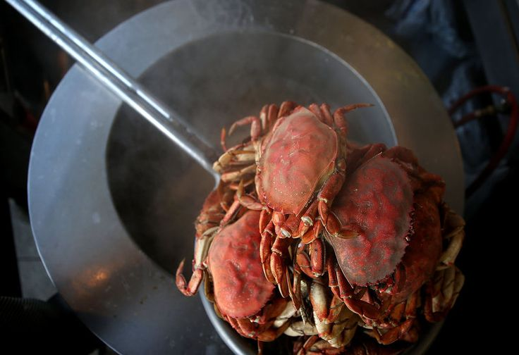 Why A Neurotoxin Is Closing Crab Season In California 11/7/15 An algae bloom has closed crab season in California. The bloom, created by Pseudo-nitzschia,produces a neurotoxin that can build up in marine life.