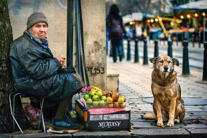 29 Photographers Intimately Capture The Lives Of Dogs Around The World http://barkpost.com/29-dogs-around-the-world/?utm_term=BARKPOST_ISNOT_%28RENEWING CANCELLED%29&utm_content=buffer4659d&utm_medium=social&utm_source=pinterest.com&utm_campaign=buffer