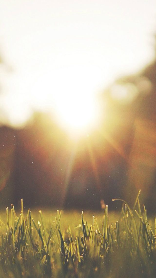 Nature Front Yard Sunshine #iPhone #5s #wallpaper