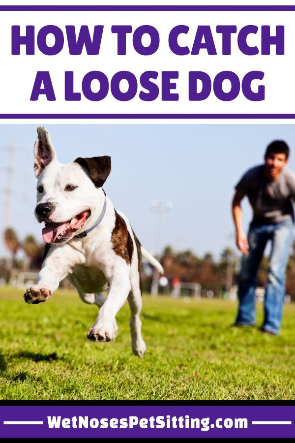 How To Catch A Loose Dog Dog Training Dogs Dog Runs