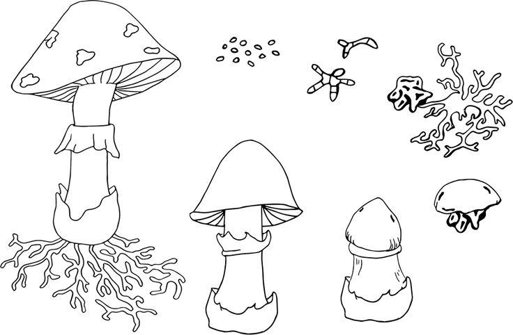 NO Svampar. Allt om tema svampar med livscykel, delar, kipp och klistra, m m. Mushroom Life Cycle