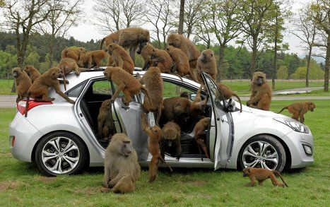 Knowsley Safari Park . This is on the re-visit list. With the safari park, climbing centre and fairground area.