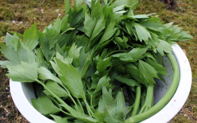 Leuşteanul, leacul din grădină. Planta hipotensivă care luptă cu viruşii, bacteriile şi paraziţii - sfaturile medicului