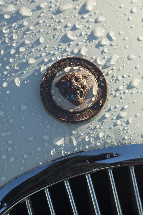 best ideas about jaguar xk jaguar xk jaguar jaguar xk120 hood detail