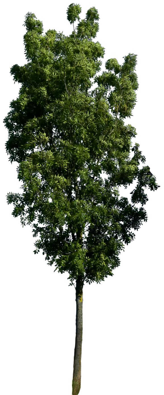 Quality 240 dpi if you use this file credit and link me for What do we use trees for
