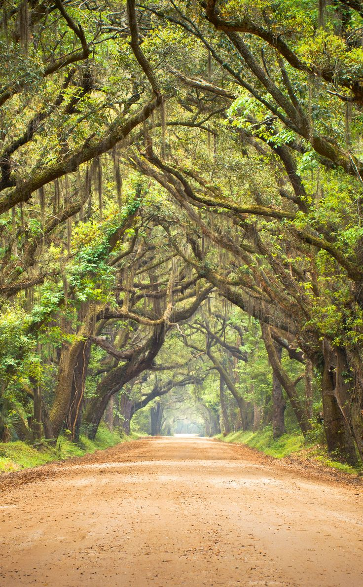 Botany Bay Plantation  | Travel | Vacation Ideas | Road Trip | Places to Visit | Edisto Island | SC | Natural Feature | Tour | Scenic Point