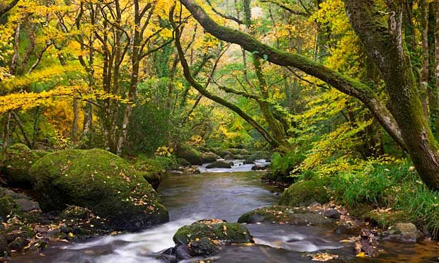 Fingle Woods