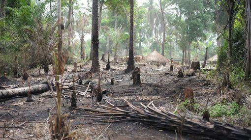 Promenons-nous dans les bois (2/4) : De l'Amazonie au Bassin du Congo : une monnaie d'échange diplomatique