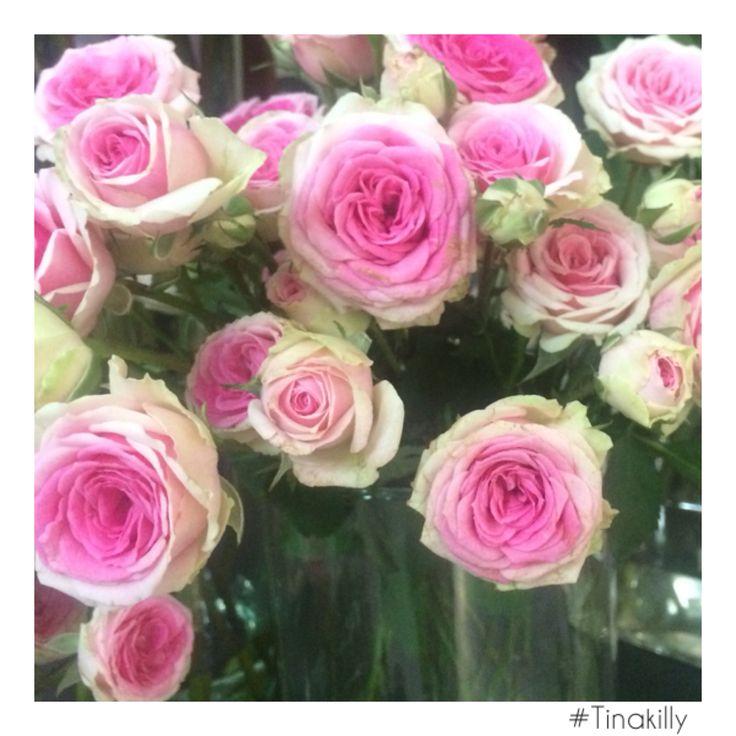 Roses are........pink @tinakilly_country_house_hotel #Tinakilly #GardenOfIreland #Roses