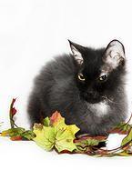 nochnoy-ohotnik | Рамзес - шикарный мужчина, жаждущий подарить любовь и нежность своей широкой кошачьей души своей новой семье. Метис корниш-рэкса, 1,5 года, кастрирован. Блестящая мягкая шерстка окраса черный дым, большие зеленые глаза и интеллигентная мордочка, - это все наш красавец. Рамзес - настоящий генератор хорошего настроения в доме. Кушает корм премиум класса, ужасный аккуратист – ходит только в чистый лоток. . http://priuyt.wix.com/nochnoy-ohotnik#!-/c1wzs