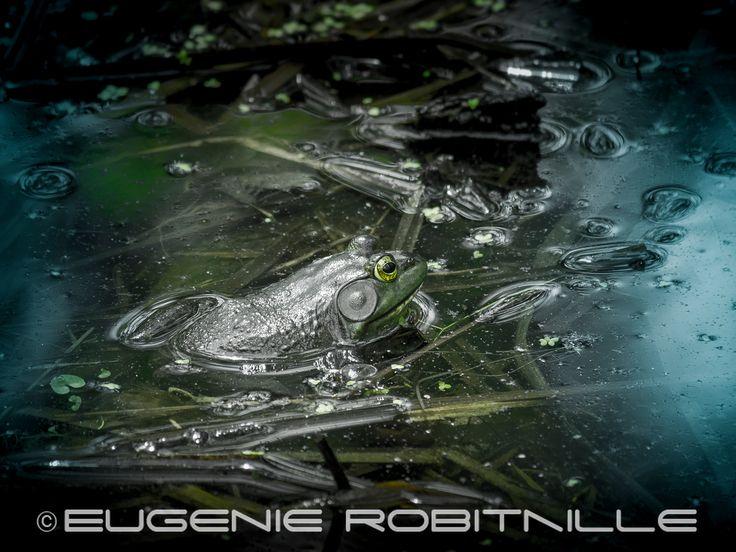 Frog in a marsh