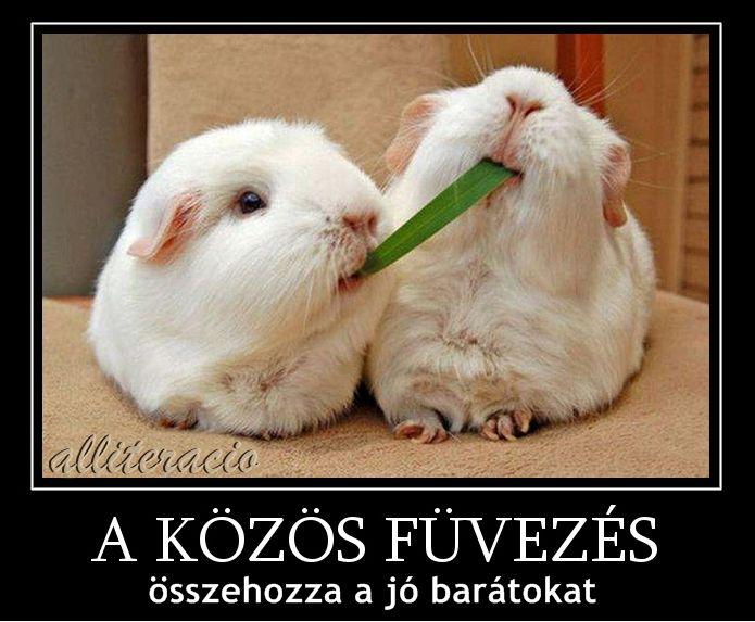vicces, humoros, aranyos, állatok, képek, cica, nyuszi, füvezés,