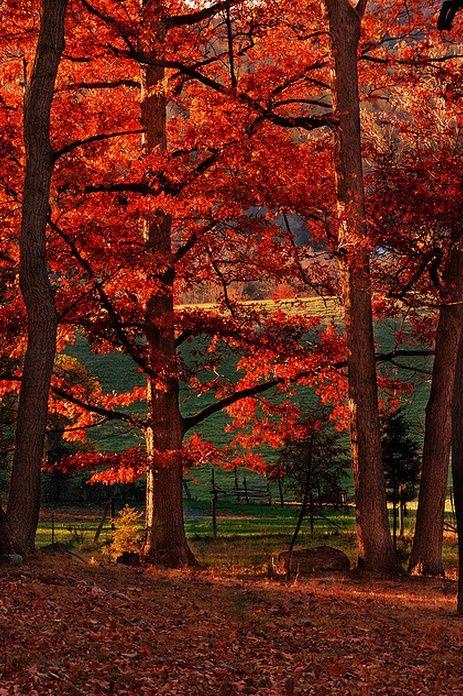 Autumn Red, Lynchburg, Virginia  photo via ferda