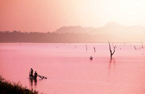 Os lagos rosas têm se popularizado entre turistas e fotógrafos do mundo. Sua cor impressionante ocorre graças a presença de microalgas como a Dunaliella salina que vive em locais com altos níveis de concentração de sal;