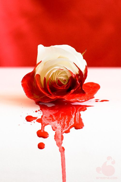 White rose painted red. Of course Alice in Wonderland comes to mind when I see this. :)