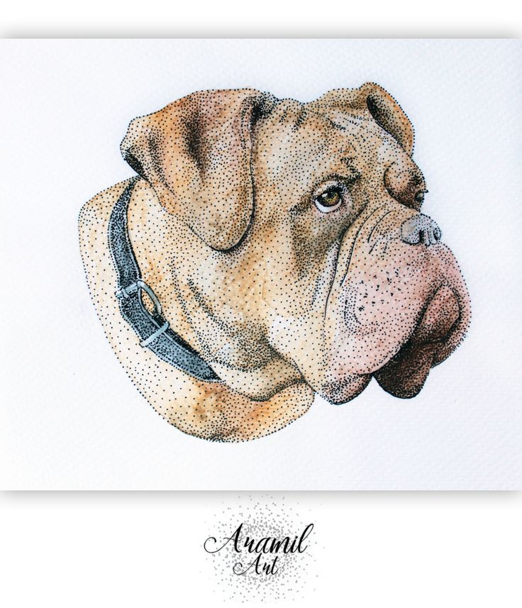 Bordeaux dog drawing, created by using about a thousand dots and colored with watercolour pencil. Art by Petra Jánosi. Come and check on FB. :)  https://www.facebook.com/aramilart
