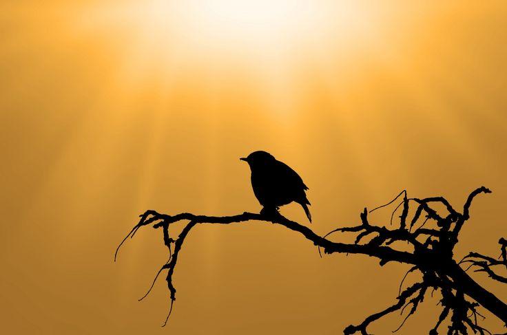 Sagoma dell'uccello sul ramo