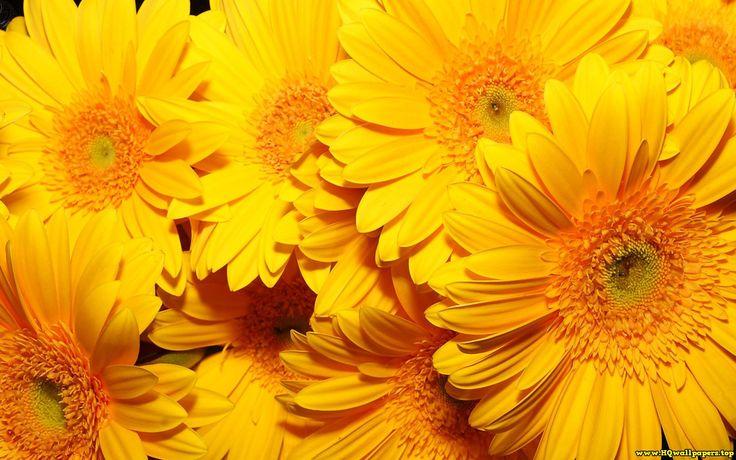 Flowers 159