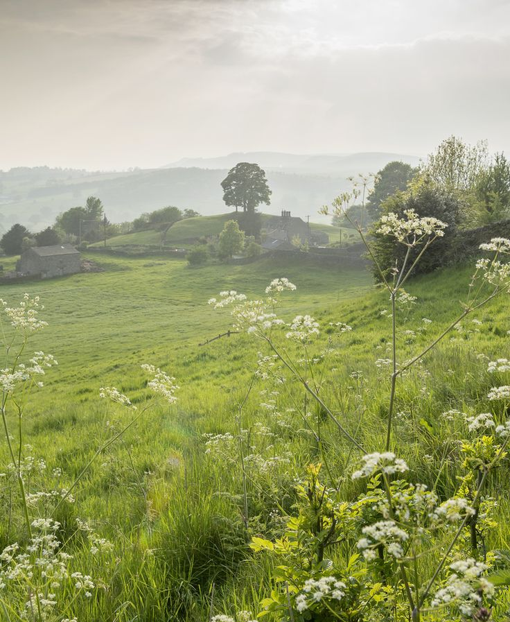 Cow Parsley in bloom - Yorkshire Dales, England by bingleyman2