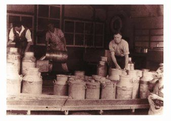 Scotty Robertson unloading milk cans at the milk factory in the early 1900's.  www.harveyfresh.com.au