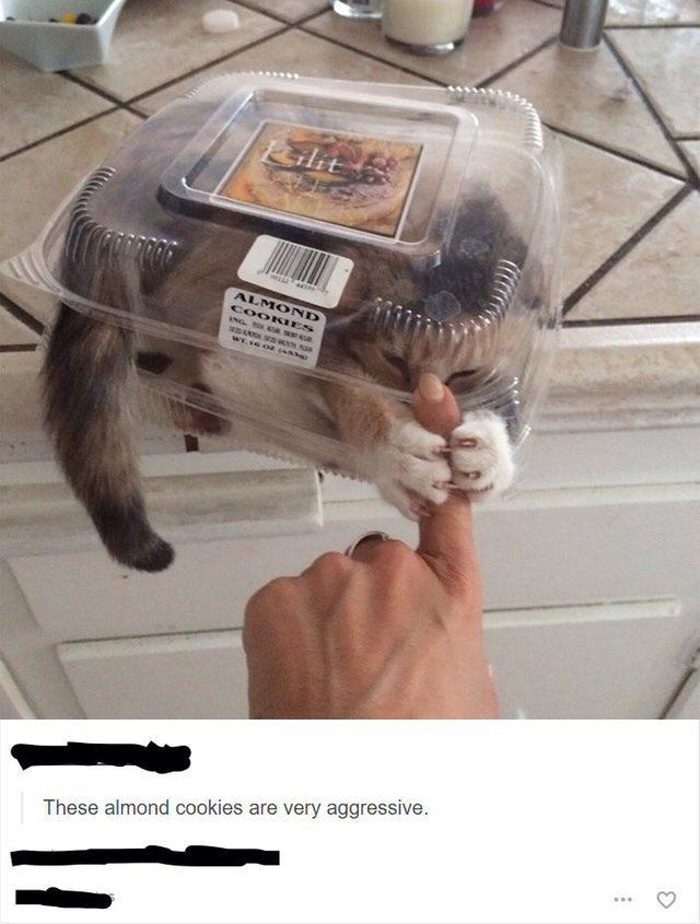 The Funniest Pictures And Memes Found On Reddit Cat Memes Funny Animals Cute Funny Animals