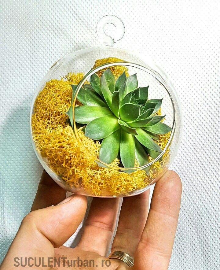 Mini terariu cu planta suculenta îmbrăcată în mușchi prezervat