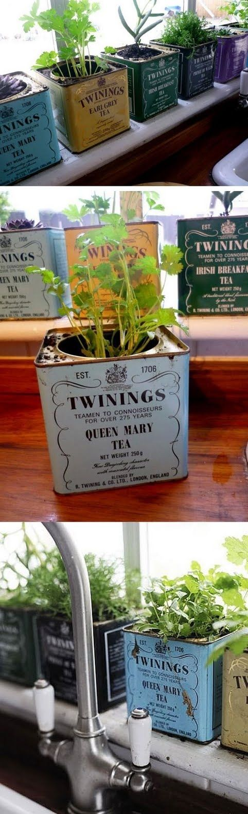 Tea tins turned herb garden: love this! Now I just need to buy some cute tea tins