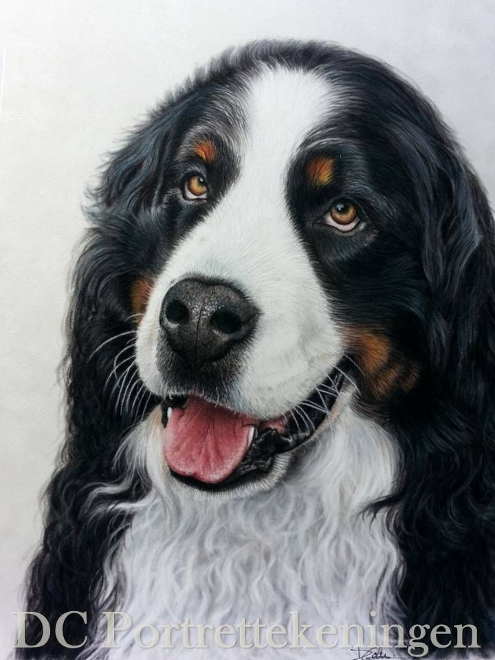 drawing made with pastel (pencils and chalc) 30x40cm #realistic #portrettekening #portraitdrawing  #coloreddrawing #drawing #pasteldrawing  #art #realism #realisticdrawing #pencildrawing  #dog #dogportrait #pet #petportrait #coloredpencil