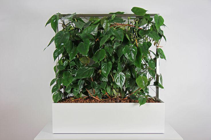 Bürobegrünung, Schallschutz, Sichtschutz, Büropflanzen
