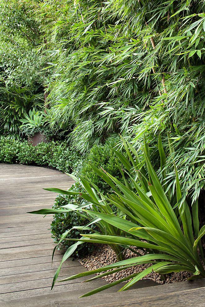 die besten 78 ideen zu tropischer regenwald auf pinterest tropischer regenwald tiere was tun. Black Bedroom Furniture Sets. Home Design Ideas