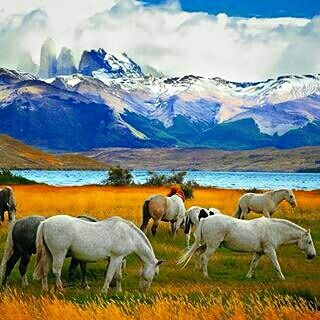 We'll go riding on the #horses the #wild ones in #patagonia Repost @letsbetravelers #TorresdelPaine
