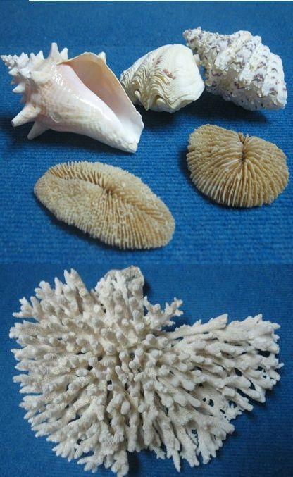 conchiglie corallo #InvasioniDigitali il 26 aprile alle ore 17.00 Invasore: Alessandro Malafronte