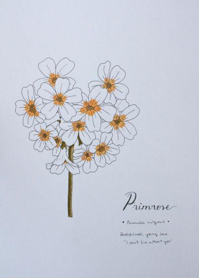 Day 20 - Primrose