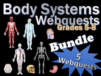 5 awesome and engaging webquests for your science class!  Files optimized for Microsoft Word 2013.  Some lessons may need to be edited by you depending on your class's grade level and/or learning goals.  Science Body Systems Webquests Grades 5-8 Bundle Includes:1.Digestive System Webquest2.Circulatory System Webquest3.Muscular System Webquest4.Skeletal System Webquest5.Nervous System WebquestEach Webquest is one page (front and back) and helps students develop their internet search skills…