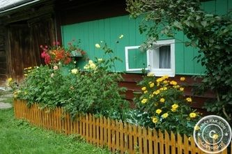 #Cosmos in the #Garden - #Behind #Wooden #Fences - #gardening #flowers #nature