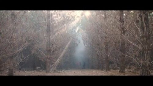 @alexiasinclair here for this weeks Phase One Instagram takeover!  Heres a behind the scenes video of my Whispers in the Woods. No location has ever creeped me out as much as this one and its for that very reason its so important to reclaim what it once was. To try and reshape its horrible history into something more than just a forest of bones. Those familiar with the Belanglo state forest will need no further introduction. For the uninitiated all I will say is that its notoriety was gained…