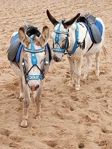 Donkeys in Skegness ~ Reminds me of happy childhood holidays