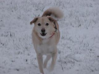 Our Daisy
