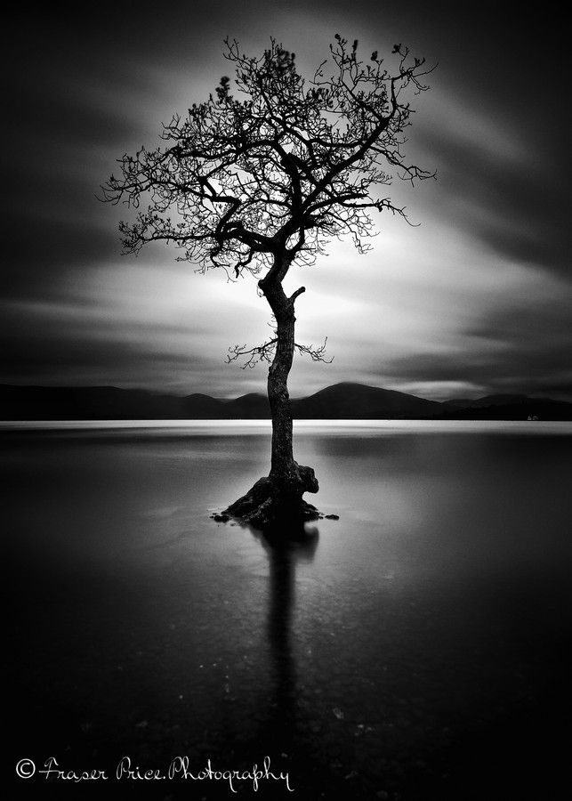 Lone tree by Fraser Price - the starkness and beauty of the Wilds, untouched by civilization.