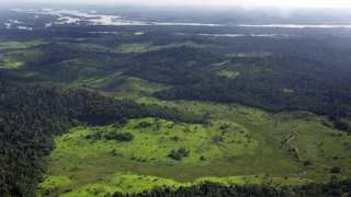 Amazon forest 'shaped by pre-Columbian indigenous peoples' - BBC News