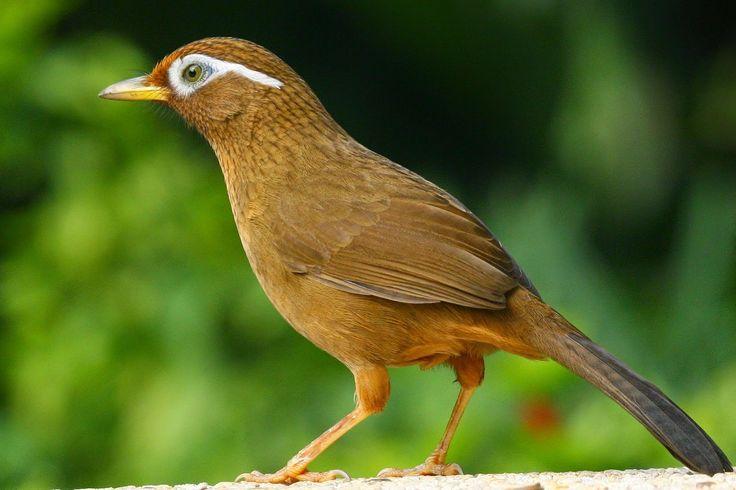 Burung http://ruparupaburung.blogspot.com/2014/08/foto-burung.html